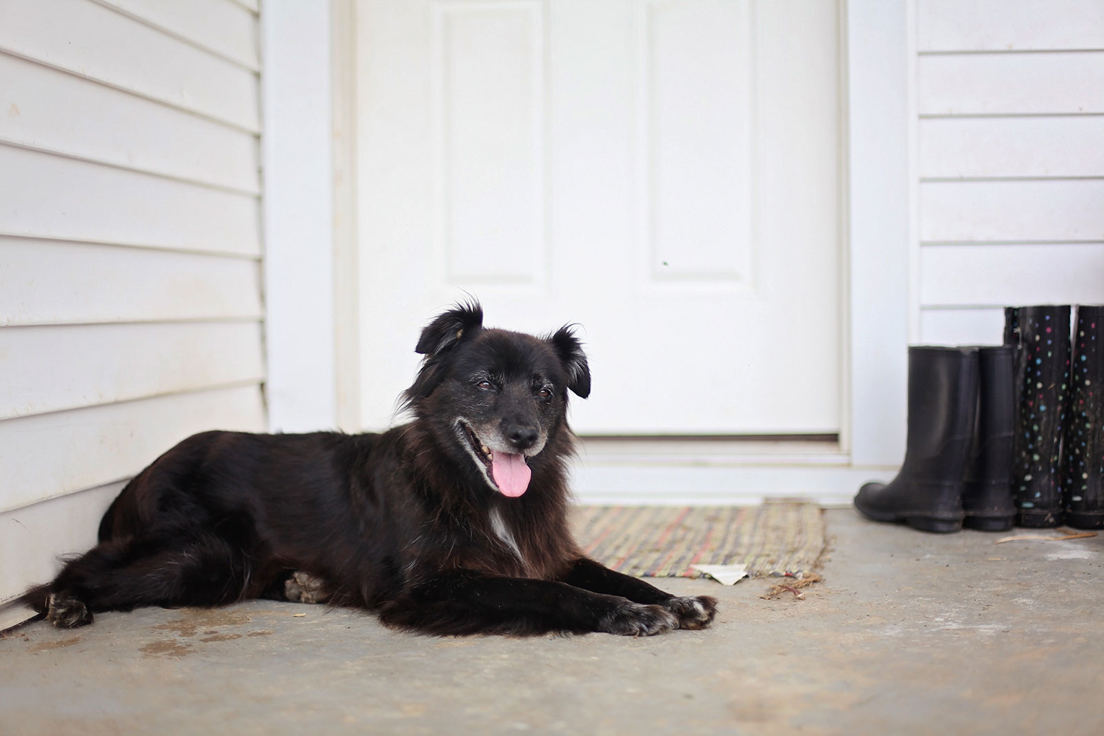 Home Buying for Pet Owners