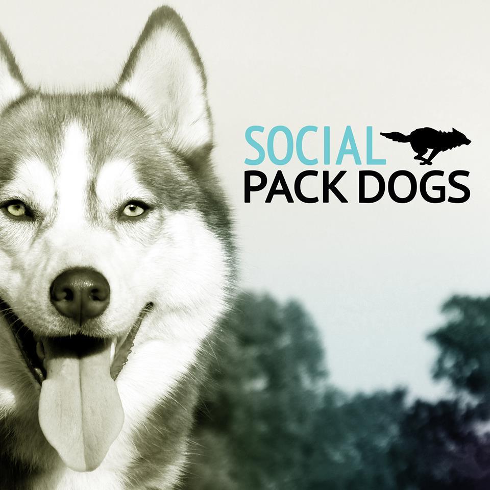 Partner Spotlight: Social Pack Dogs