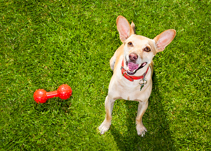 """Calling All Dallas Dog Owners: 5 """"Paw-Fect"""" Dallas Dog Parks"""