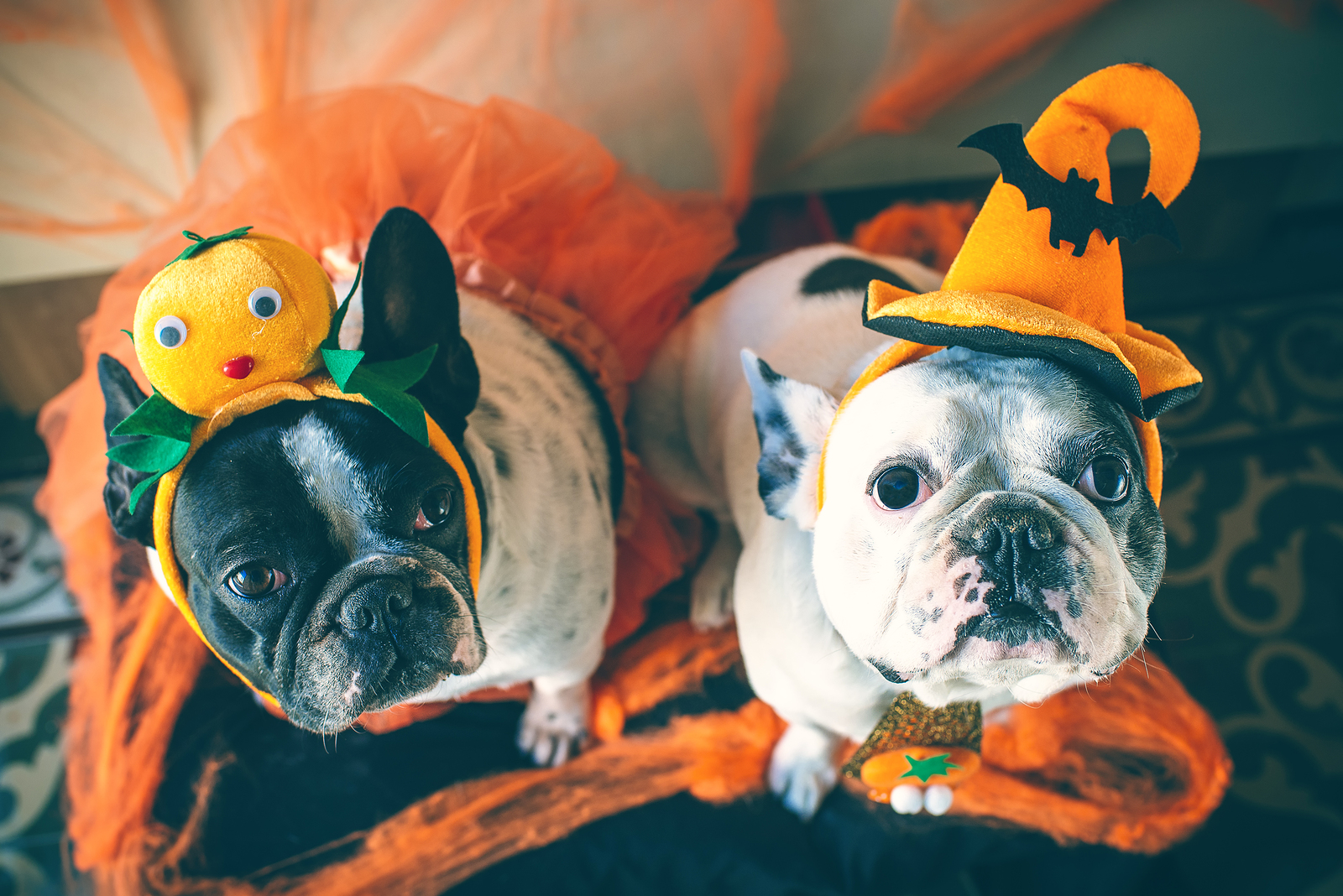 The Most Spook-tacular Dog Costumes for Halloween