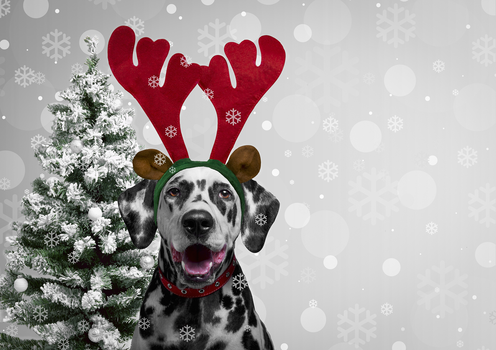 The Ulti-mutt Holiday Gift Guide: Pet Edition
