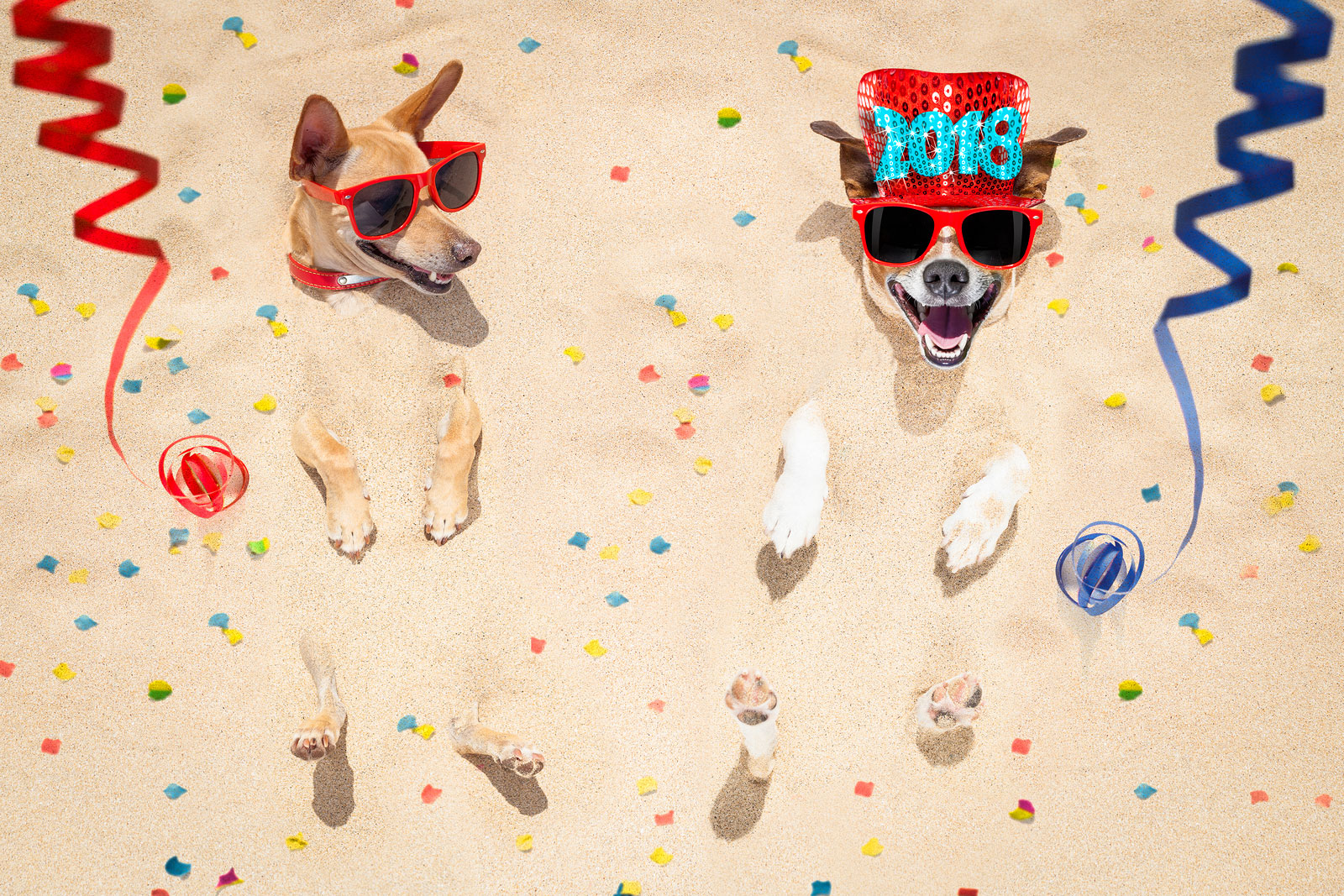 Dog Friendly New Year's Eve Celebrations in Dallas