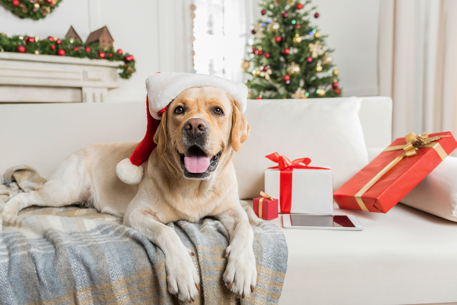 """Scoop Soldiers Gift Card: The """"Paw-fect"""" Christmas Present"""