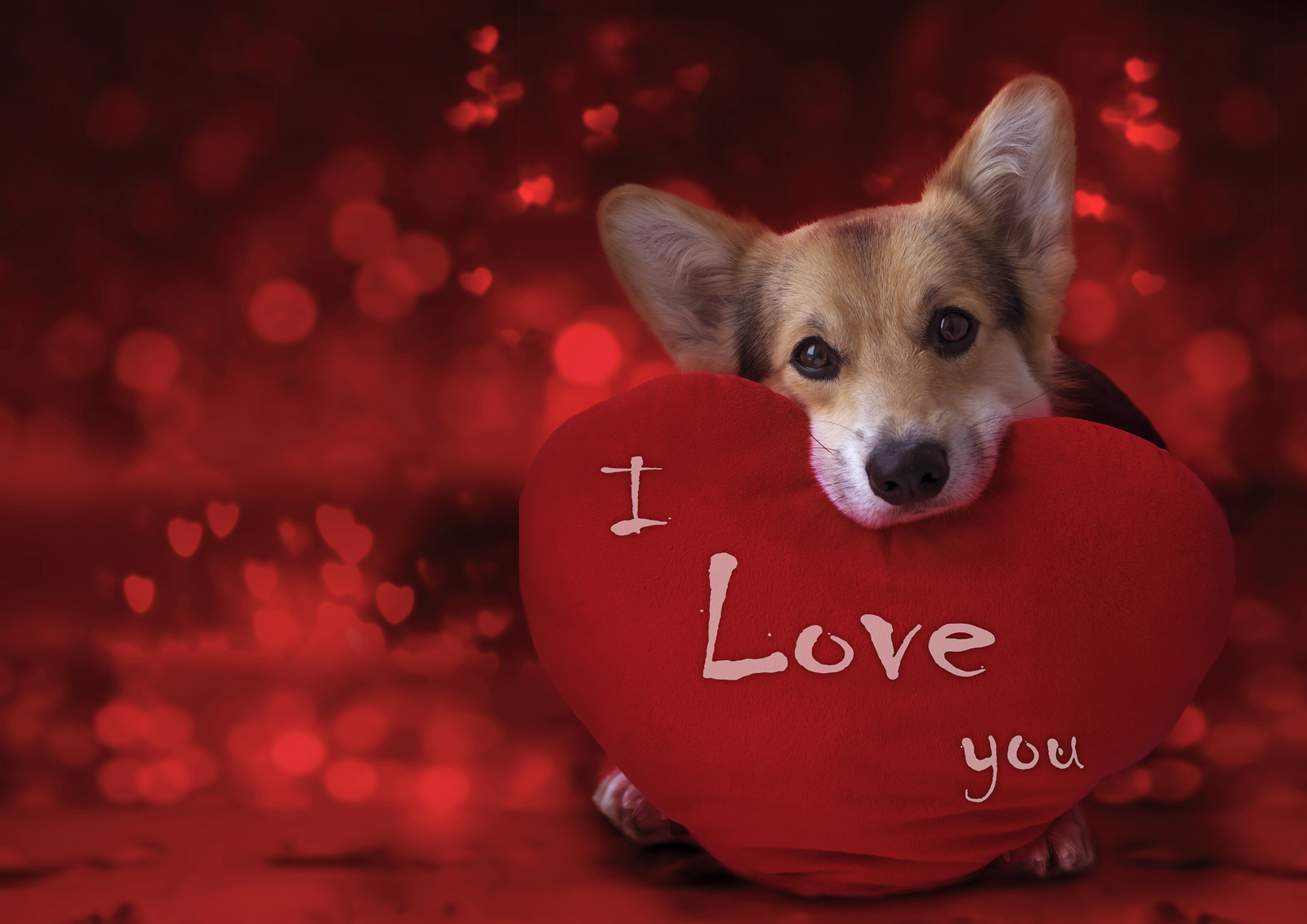 """Valentine's Day """"Treats"""" for Your Pup"""