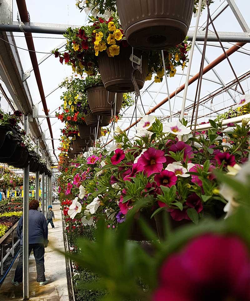 Floral Acres Interior
