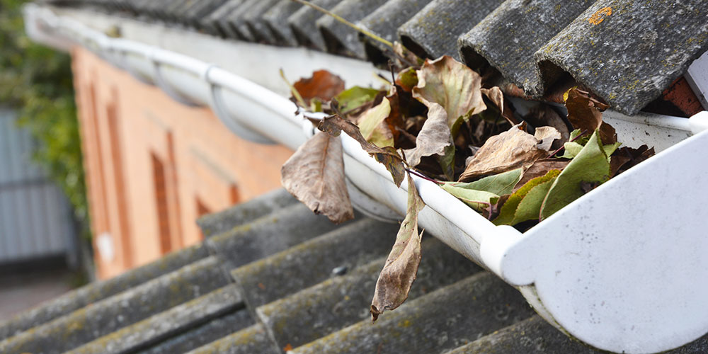 close up of leaves in roof gutter