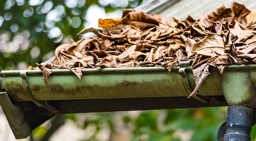 leaves overflowing in roof gutter