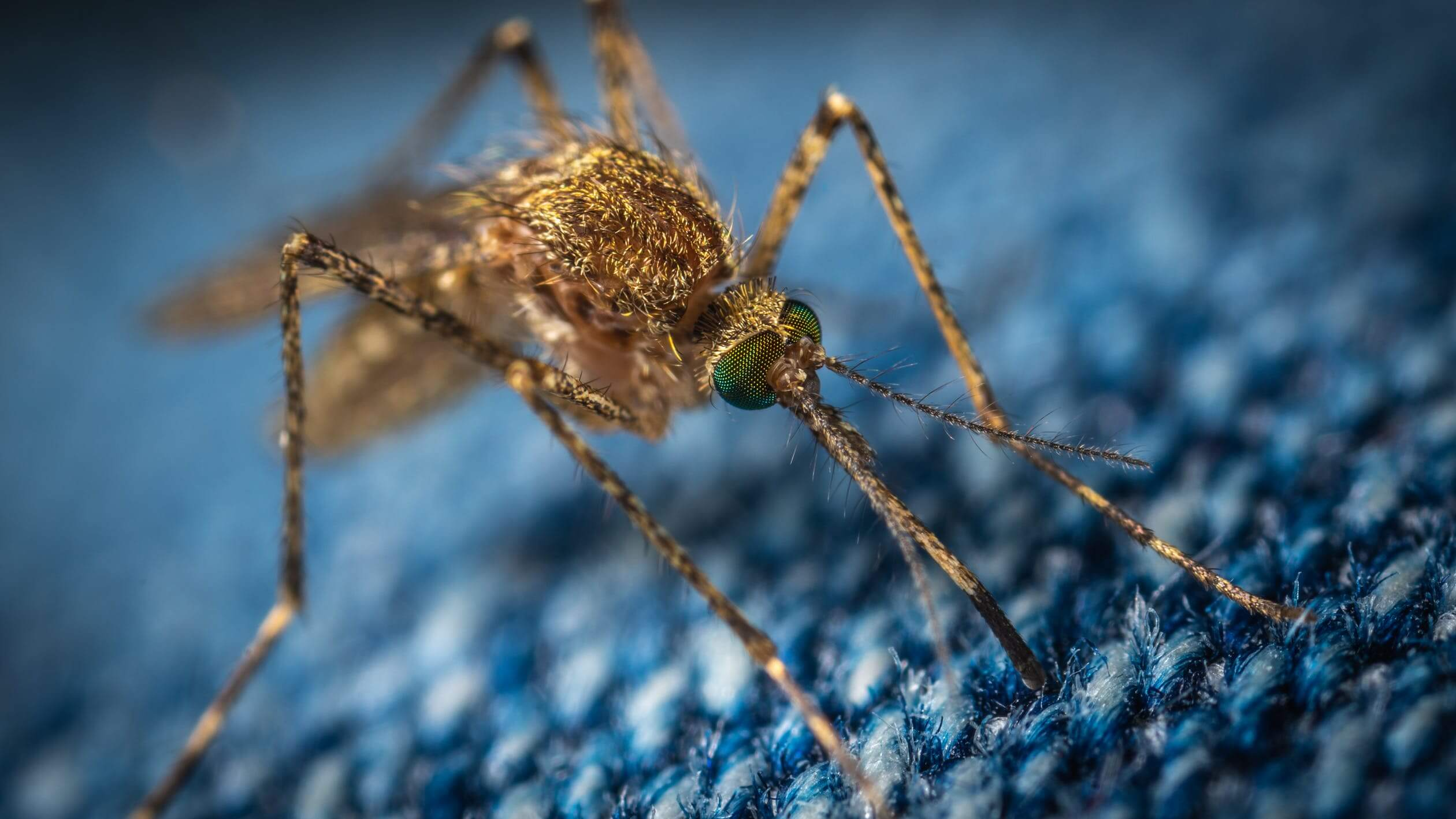 brown mosquito sitting on clothes