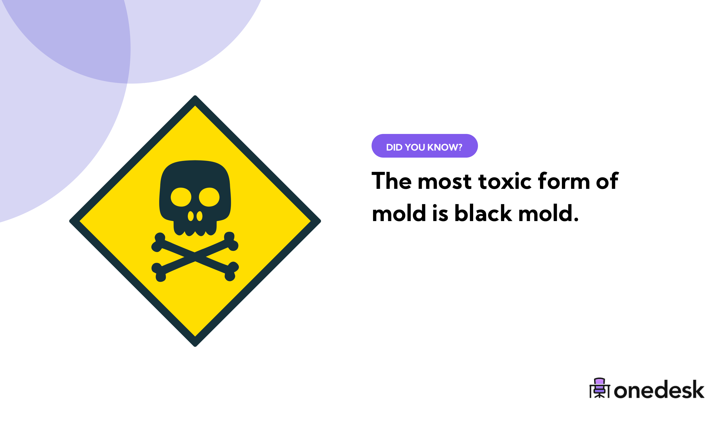 the most toxic form of mold is black mold