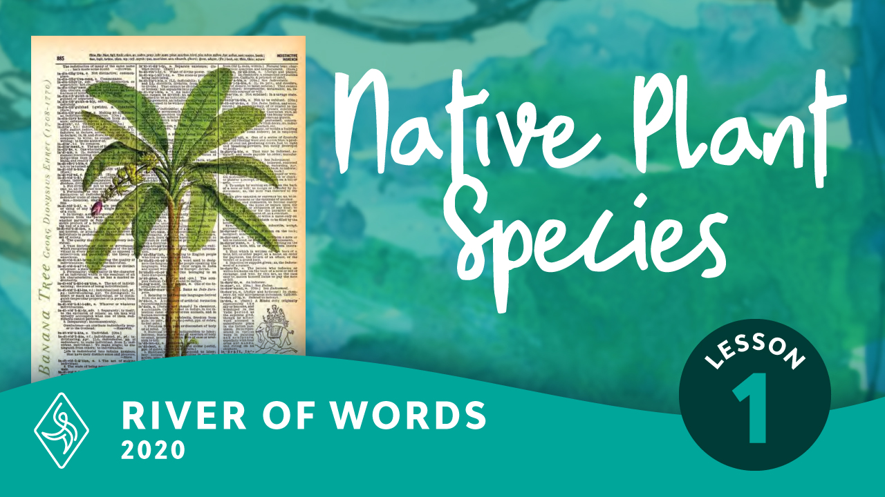 Illustrating Native Plant Species