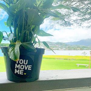 you move me housewarming plant