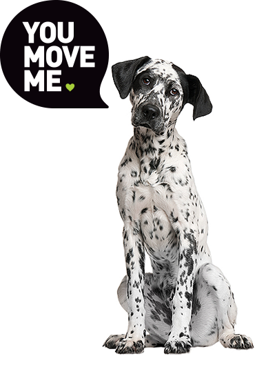 You Move Me Dalmation