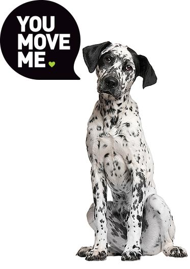 You Move Me Dalmation dog