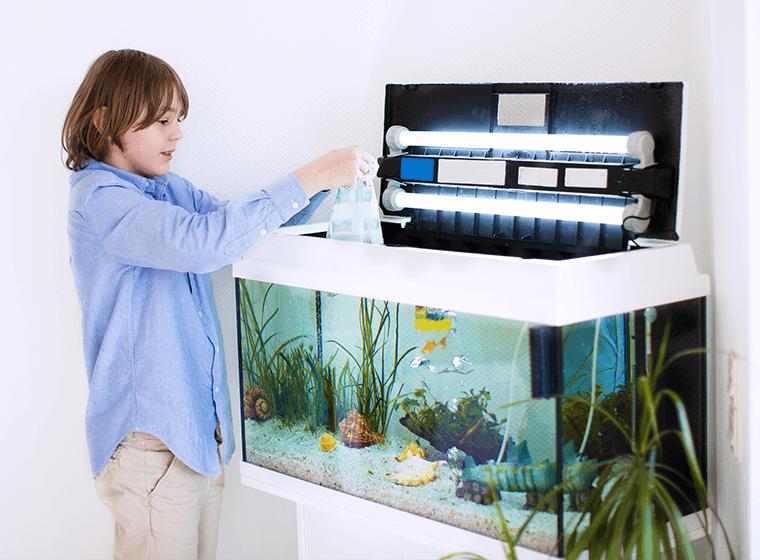 Boy Adding Fish into Tank