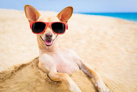 dog-in-summer-heat