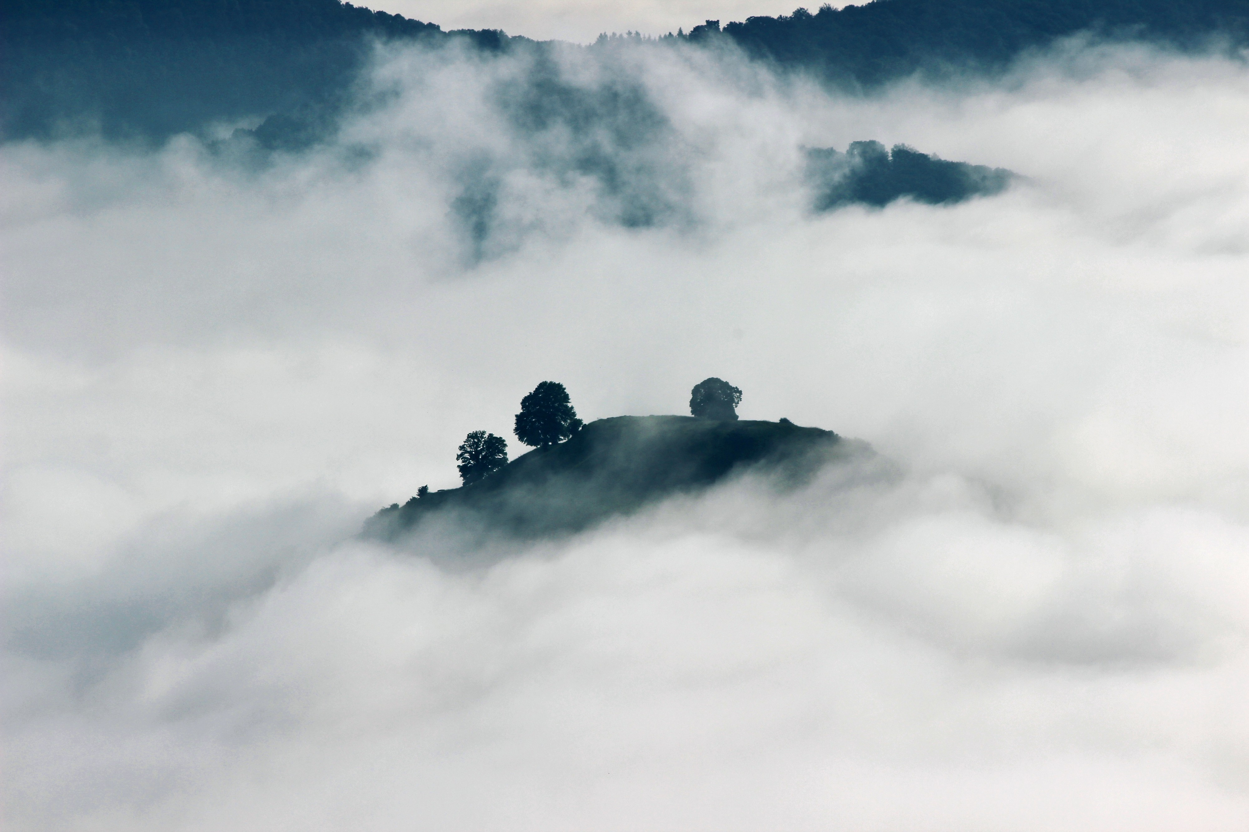 A clear image of a hill and trees jutting out form a blanket of fog