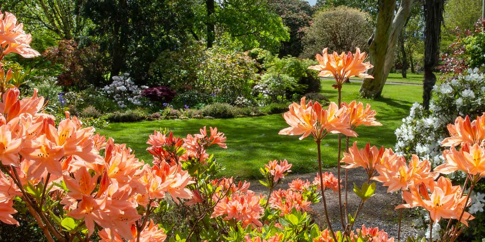Gardens & Gallops of Unseen Ireland