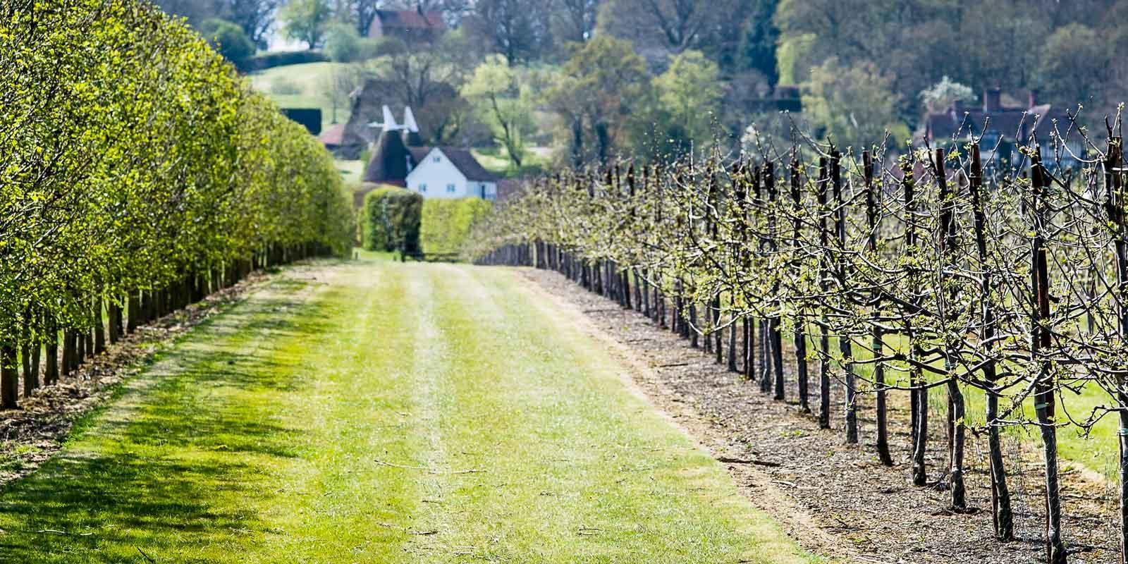 Hush Heath Winery by Belmond British Pullman
