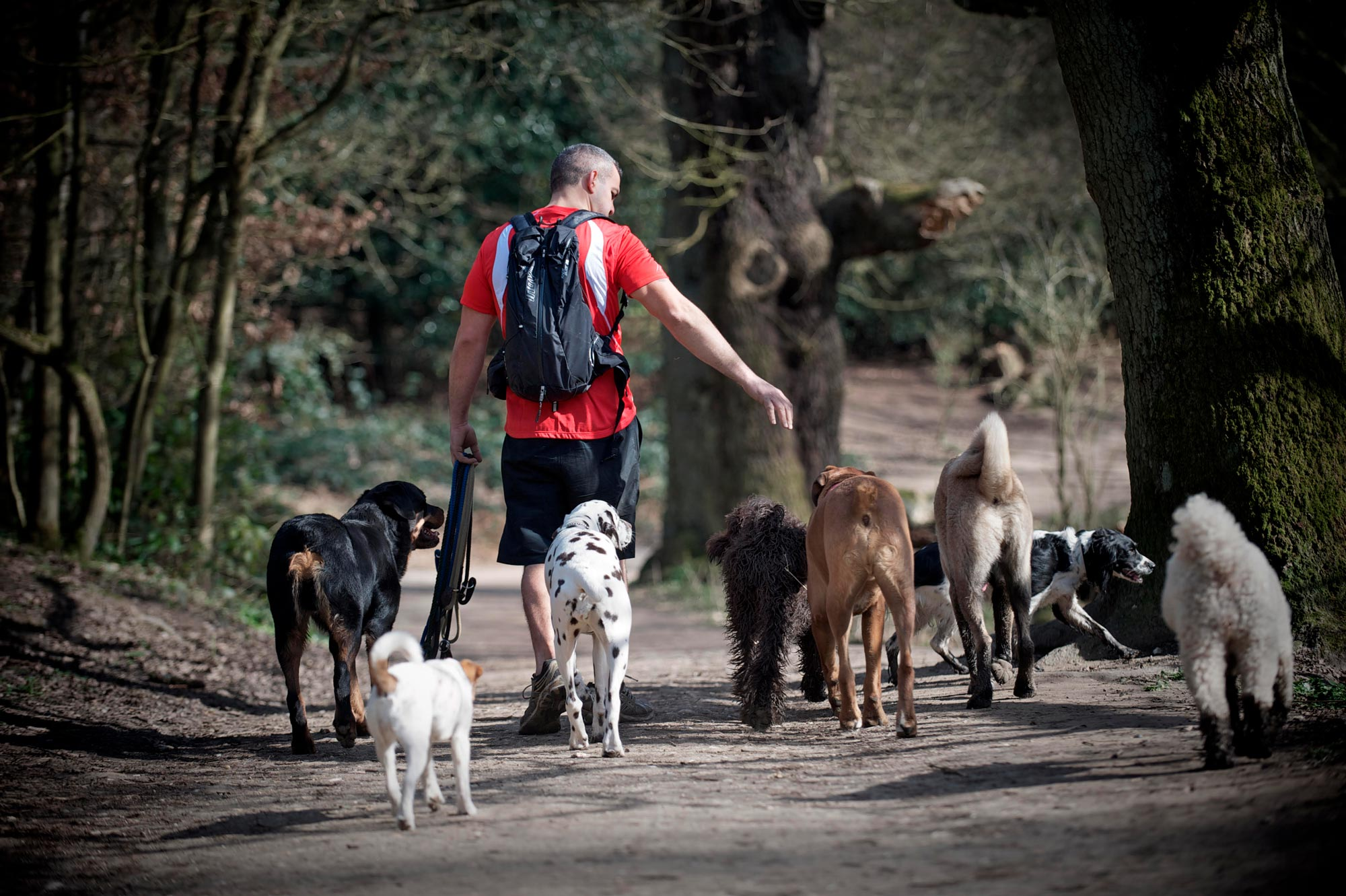 Dogs on walk in park