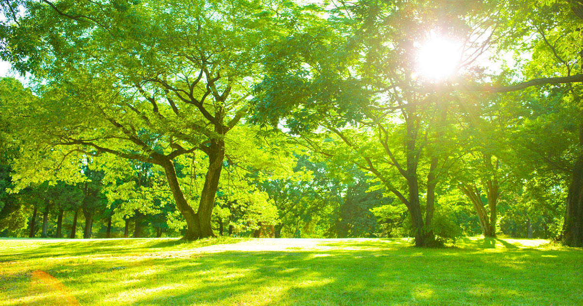 Image of a green park on a sunny day.