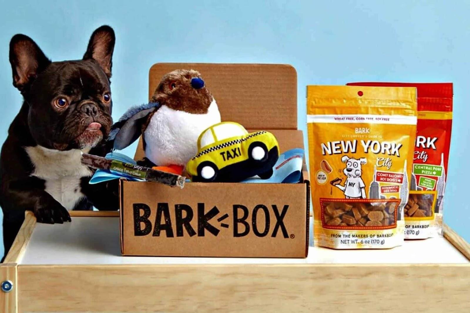 dog with Bark Box