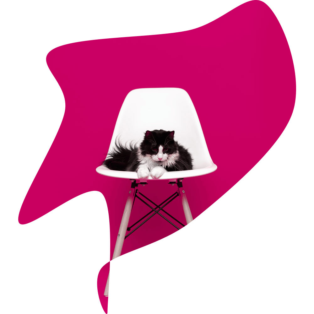 Black and white fluffy cat sitting on a white chair on a bright pink background.