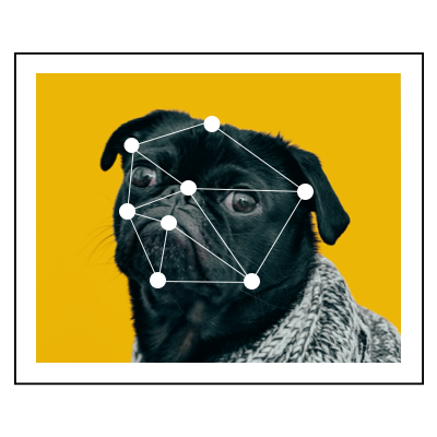 Photo of a pug with AI analyzing his face.