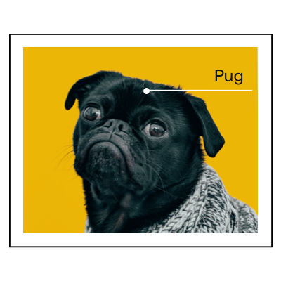 A photo of a pug and labeled as a pug.