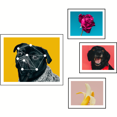 Pug image compared to an image of a rose, lab, and banana.