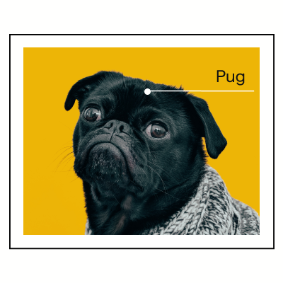 Pug image labeled pug