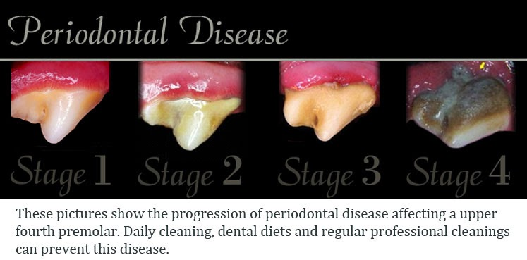 Periodontal stages of Canine dental disease