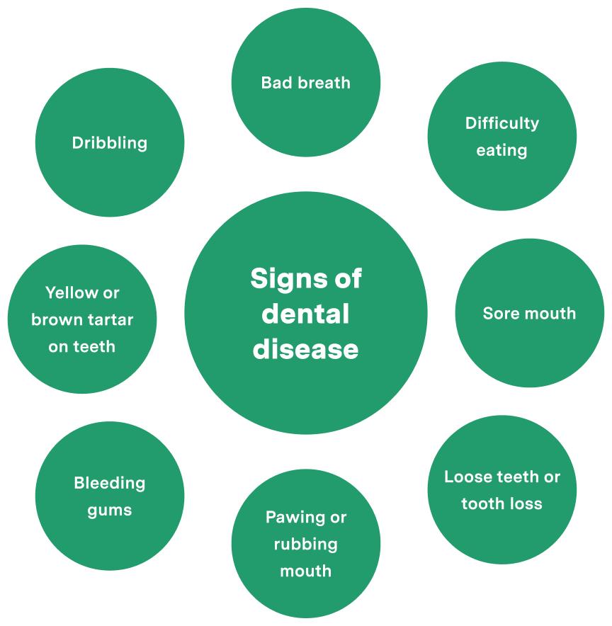 Signs of dental disease wheel chart leading factors