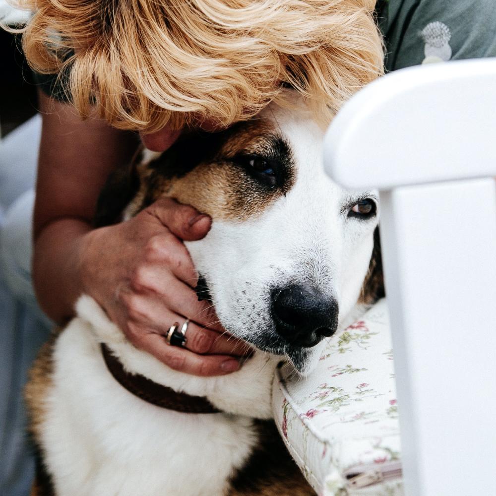 Female pet owner cuddling Pyrenean Mountain Dog