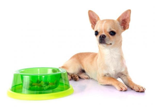 Chihuahua laying down next to green plastic bowl with treats