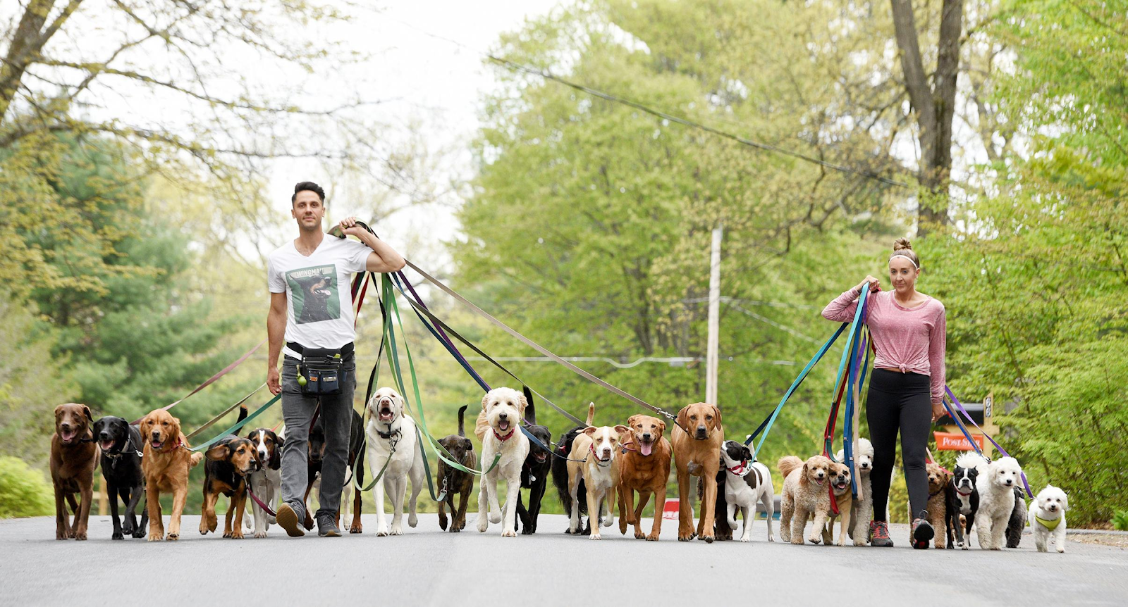 Male and female dog walkers walking a line up of different breeds down concrete road
