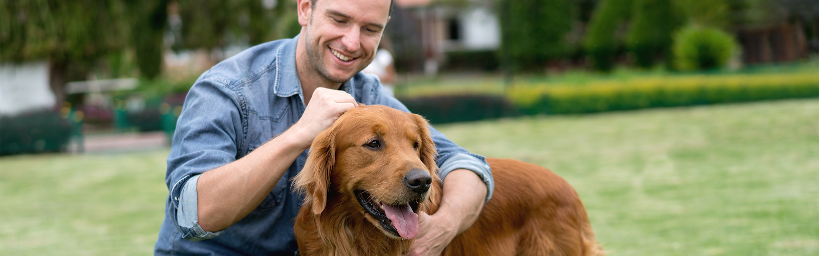 Male canine owner petting Golden Retriever in front yard