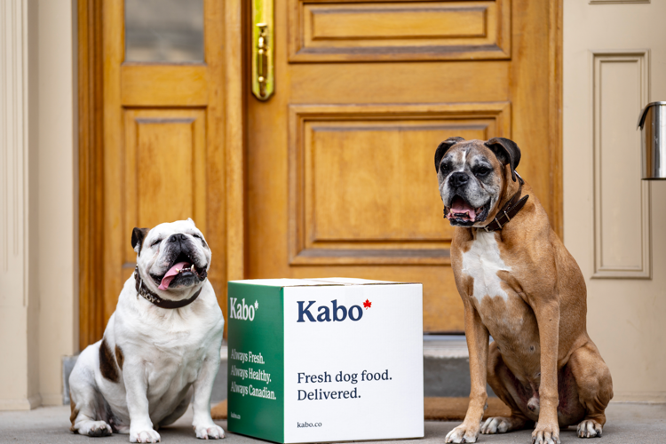 Pitbull and Boxer sitting beside Kabo delivery box on doorstep