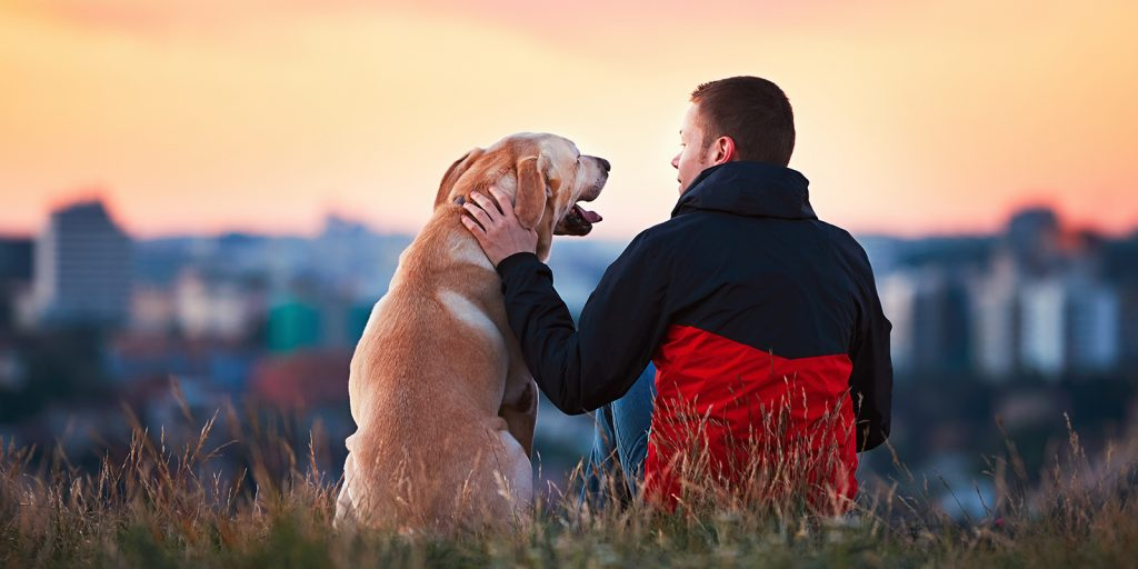 Male pet owner petting golden smooth coat dog and showing affection