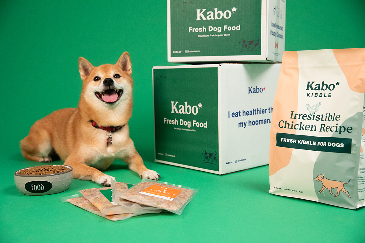 Shiba Inu sitting next to Kabo boxes with Kabo chicken kibble and fresh beef and chicken meals