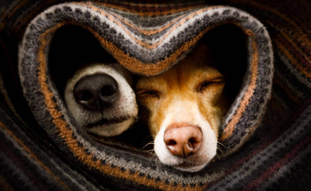 Two dogs sleeping in grey and orange blanket