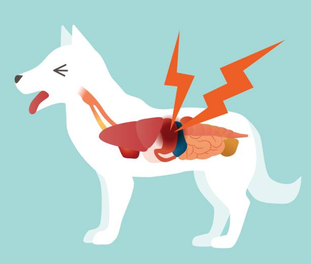 Cartoon illustration of a large white dog experiencing kidney pains
