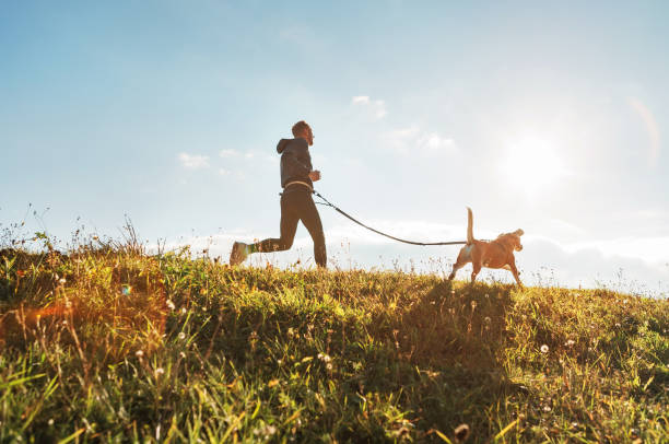 Athletic man running across mountain top with hip leash attached to running dog during sunset