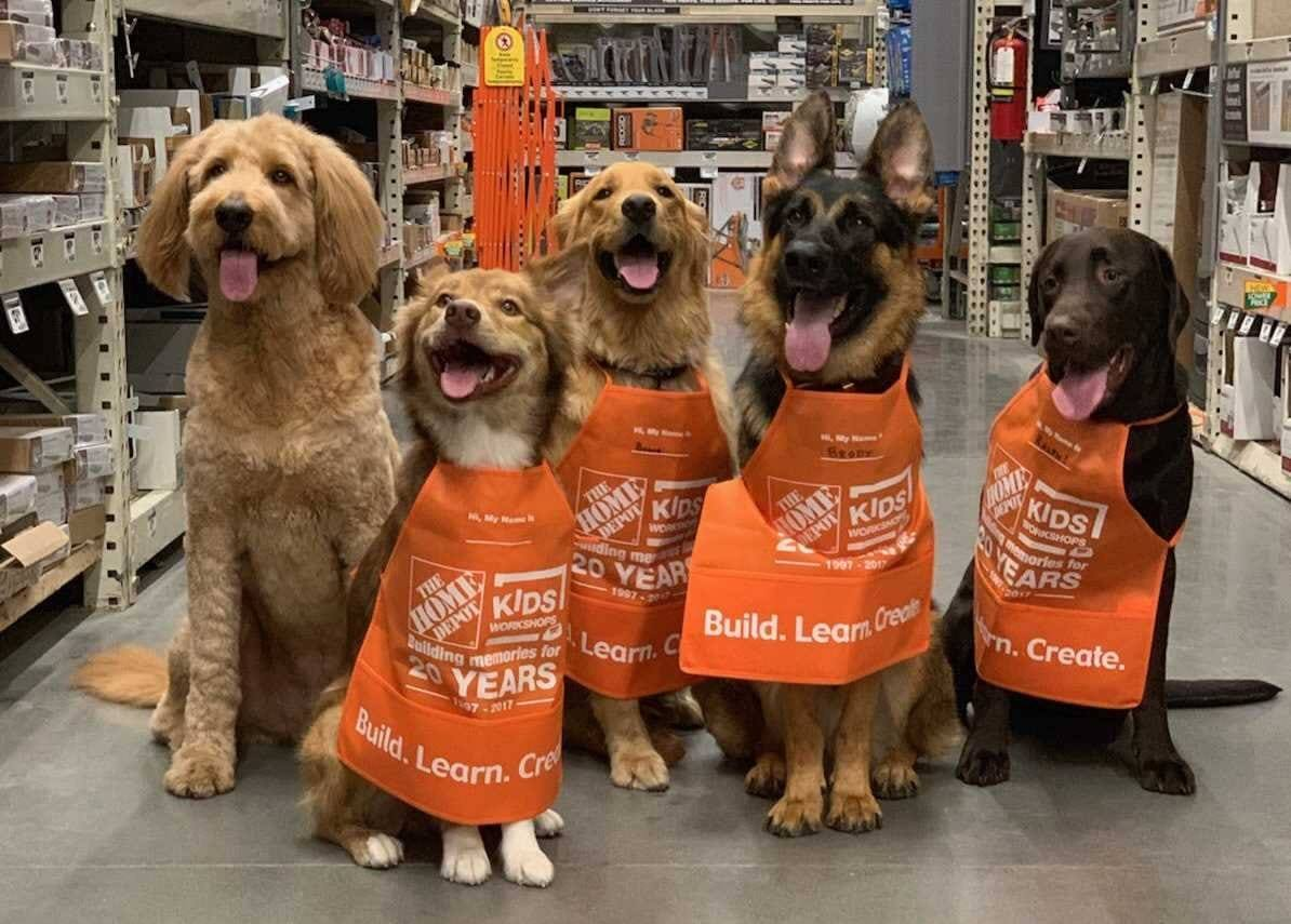 Group of different dogs wearing Home Depot aprons smiling with tongue out