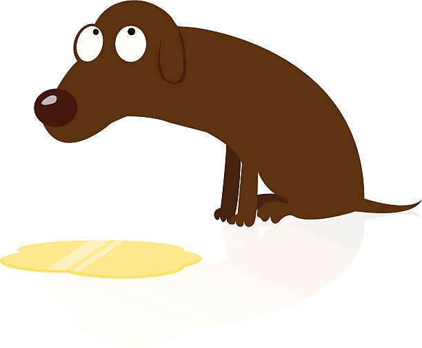 "Ashamed Dog Peed ""Dog ashamed after peeing on floor. Include AI, PDF, JPG."" dog urinary  stock illustrations"