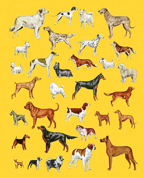 Variety of Dogs Variety of Dogs purebred dog stock illustrations