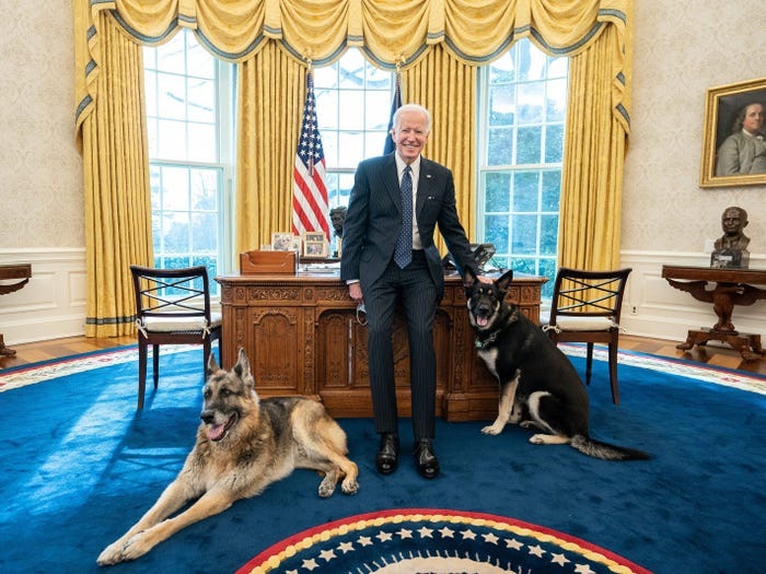 Biden Dogs Champ and Major's Life at the White House