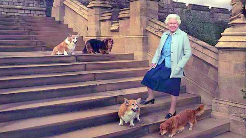 Queen Elizabeth II adopts dog she fell in love with