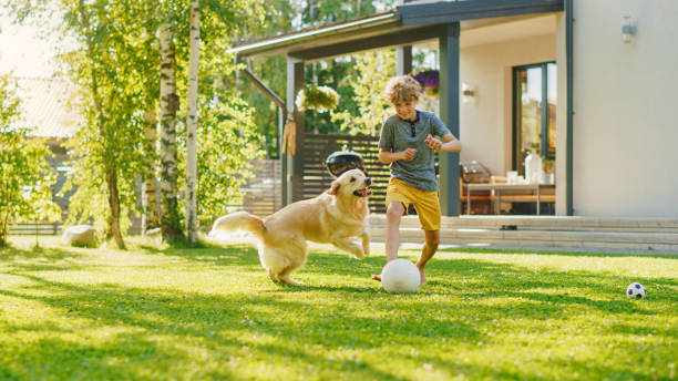 Handsome Young Boy Plays Soccer with Happy Golden Retriever Dog at the Backyard Lawn. He Plays Football and Has Lots of Fun with His Loyal Doggy Friend. Idyllic Summer House. Handsome Young Boy Plays Soccer with Happy Golden Retriever Dog at the Backyard Lawn. He Plays Football and Has Lots of Fun with His Loyal Doggy Friend. Idyllic Summer House. dog run stock pictures, royalty-free photos & images