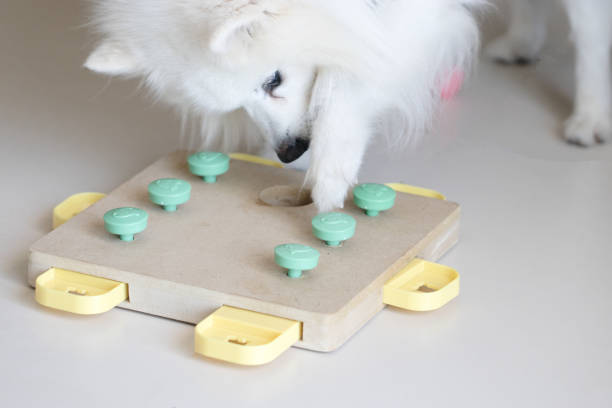 Dog playing Intellectual game. Training game for dogs. Dog playing Intellectual game. Training game for dogs. dog puzzle stock pictures, royalty-free photos & images