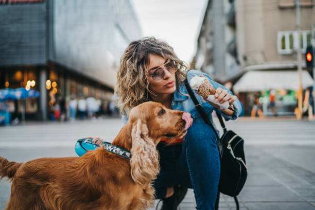 Sharing ice cream Beautiful young woman and her dog cocker spaniel eating ice cream in the city on sunny summer day dog human food stock pictures, royalty-free photos & images